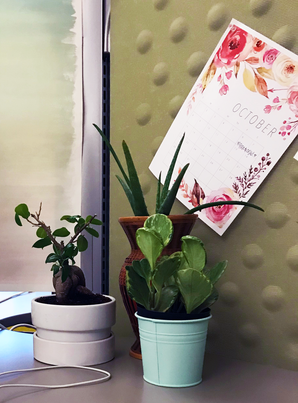 desk_office_plants.png