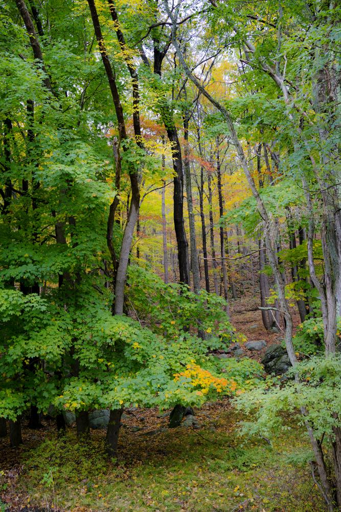 Harriman State Park Hike_006.jpg