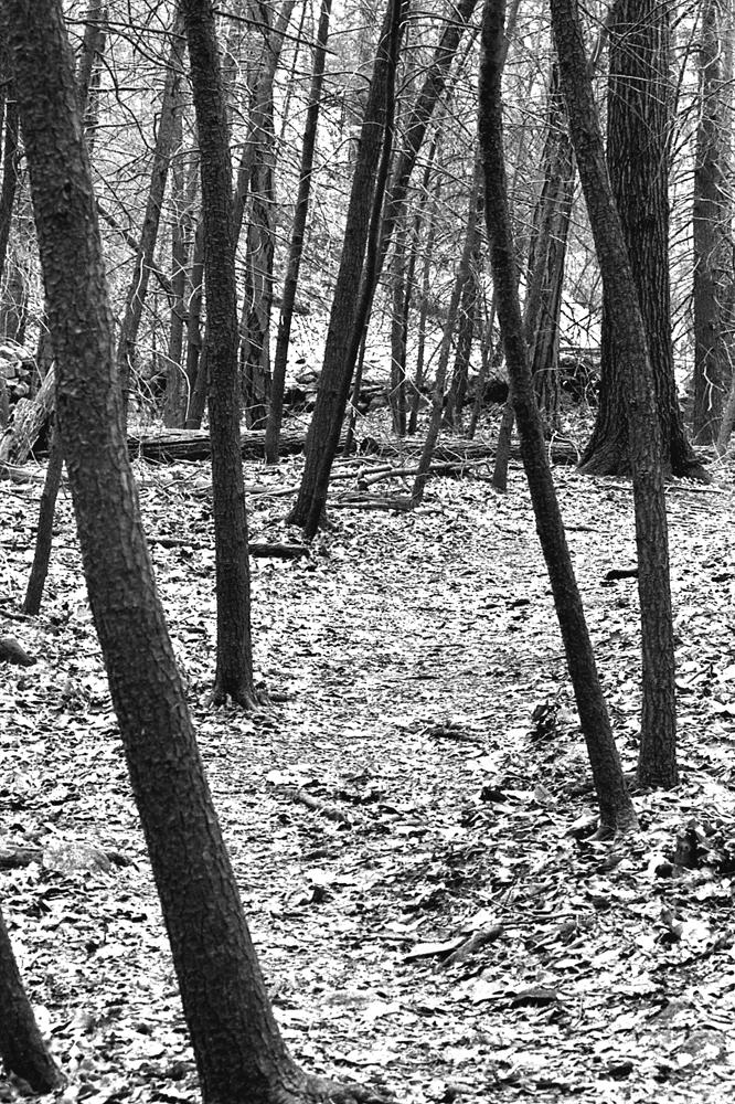Leaning trees 12_05.jpg