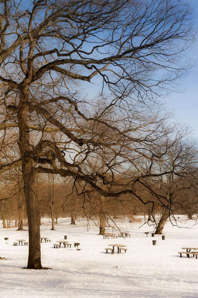 Prospect Park in Snow_004A.jpg