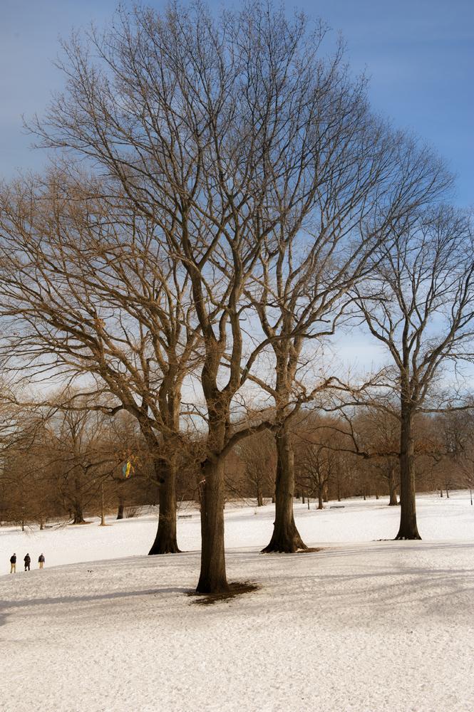 Prospect Park in Snow_019A.jpg