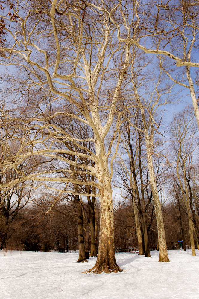 Prospect Park in Snow_096A.jpg