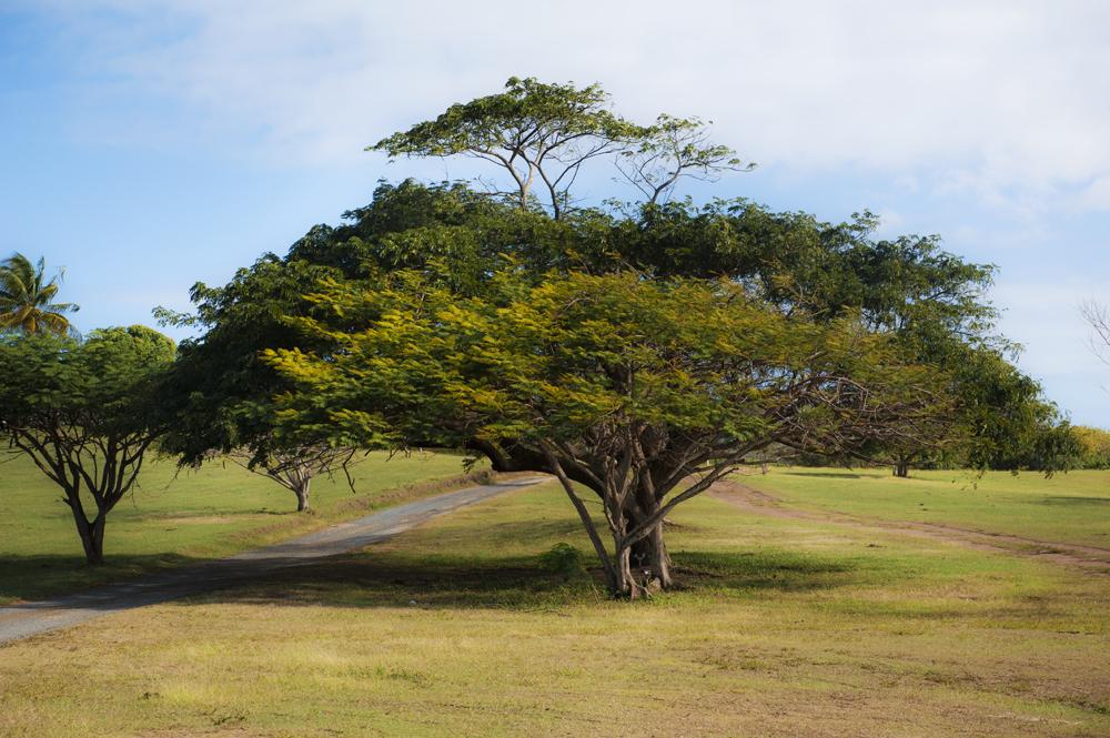 Vieques, PR_459.jpg