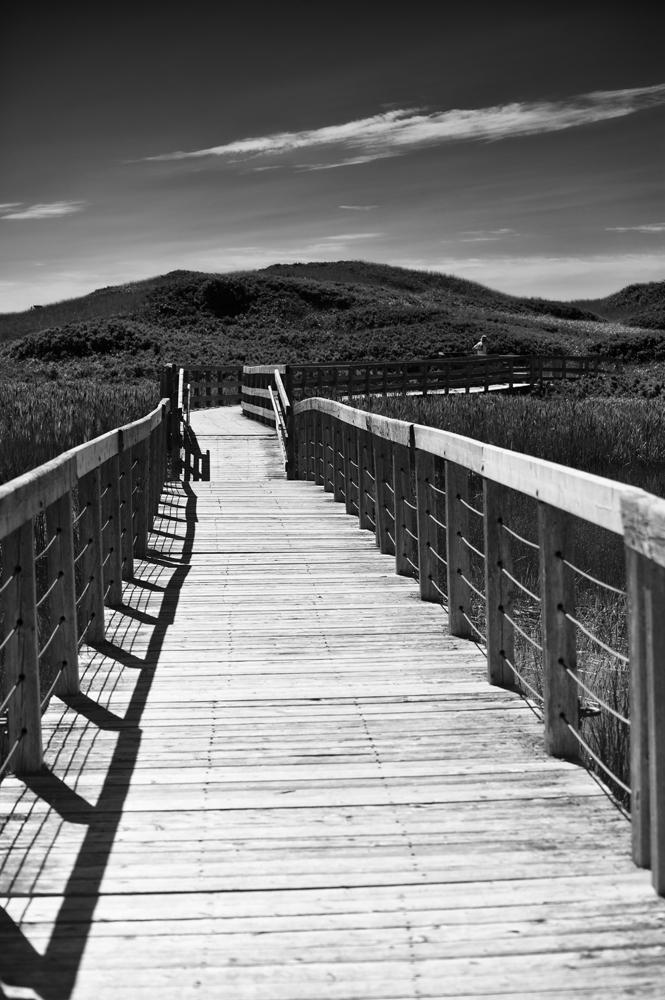 Prince Edward Island_067 b&w.jpg