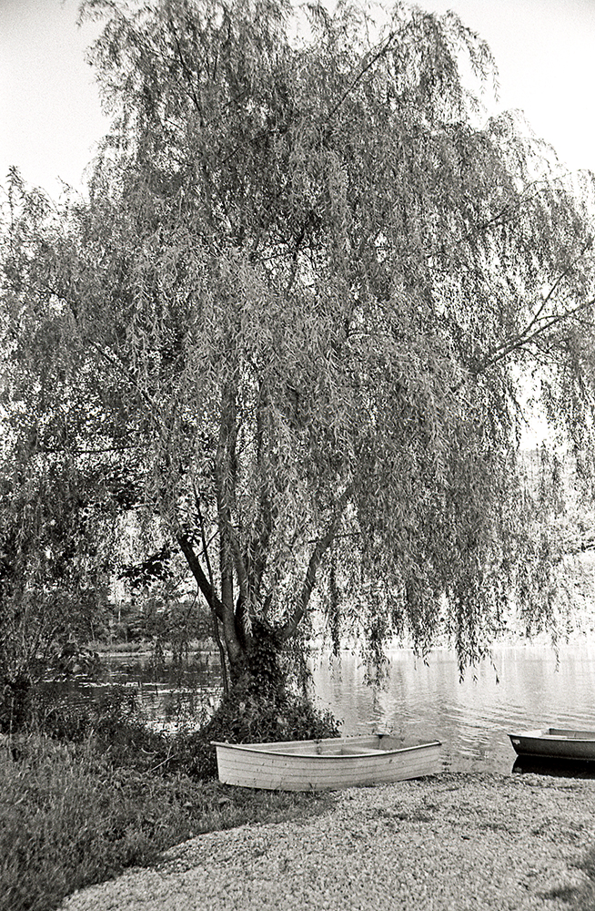 Willow tree at Lake Celeste copy.jpg