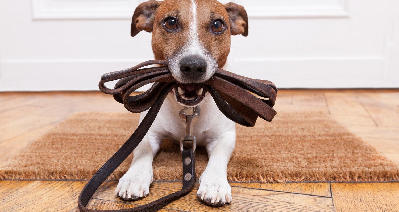 Puppy Plus The Surrey Dog Training Company