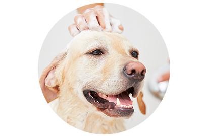 The Surrey Dog Training Company Professional Friendly Dog