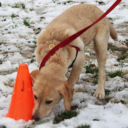 Imdt Classes The Surrey Dog Training Company