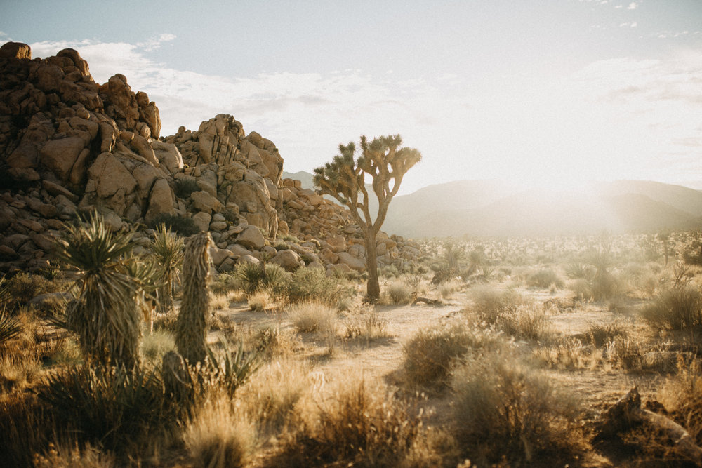 Joshua Tree National Park Adventure Couples Session Photographer Payton Marie Photography-7.jpg