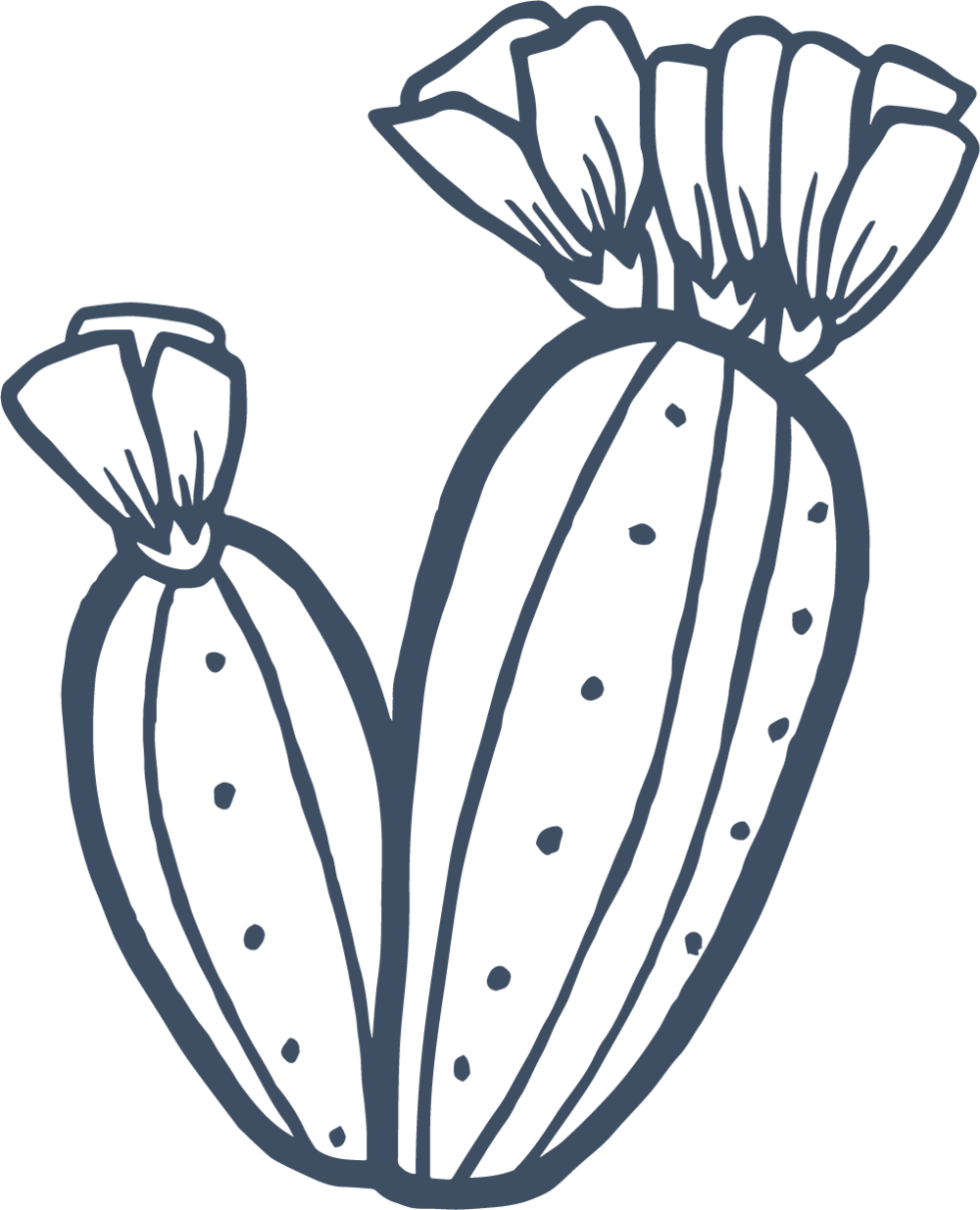 Cactus Blue.png