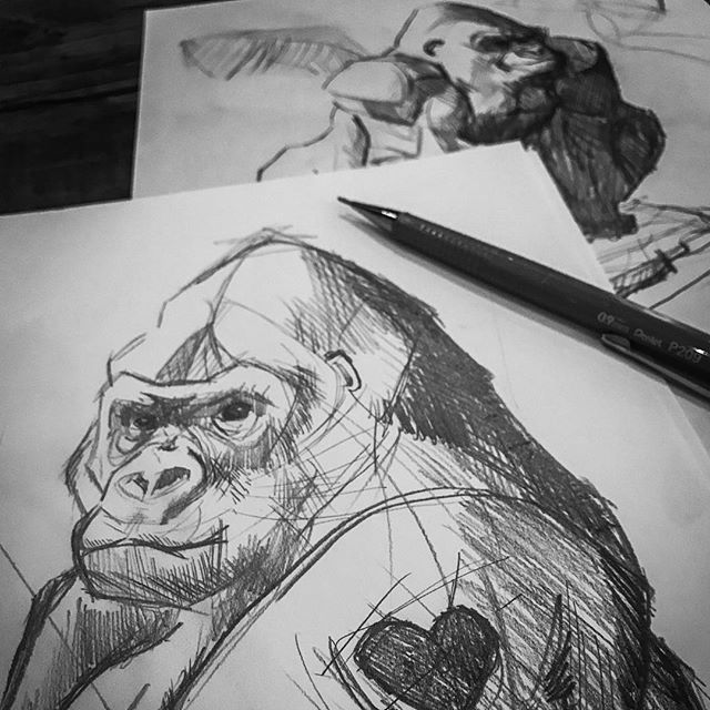 Practicing to draw gorillas 🦍 ...future painting projects. #sketch #drawing #drawings #drawingsketch #drawdrawdraw #arts #art #drawdaily #draw