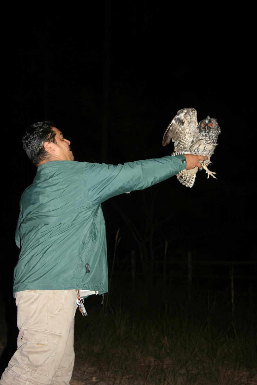 Stygian Owl Project releasing tagged owl.JPG