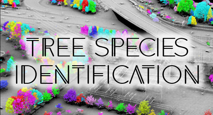 Inventory - Tree Species Classification, Other Vegetation Identification