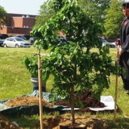 Grad Day Tree Planting