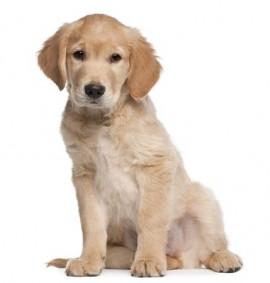 puppy-wisdom-e1416362306365.jpg