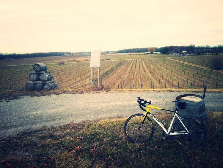Giant+Vineyards.jpg