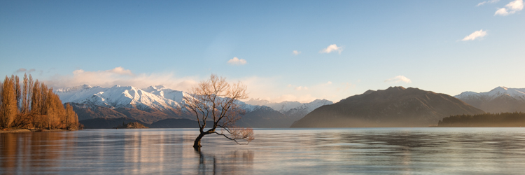 Wanaka Tree Panorama.jpg