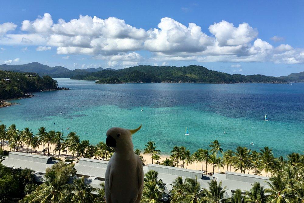 The Reef Hotel Dani Stevens .jpeg