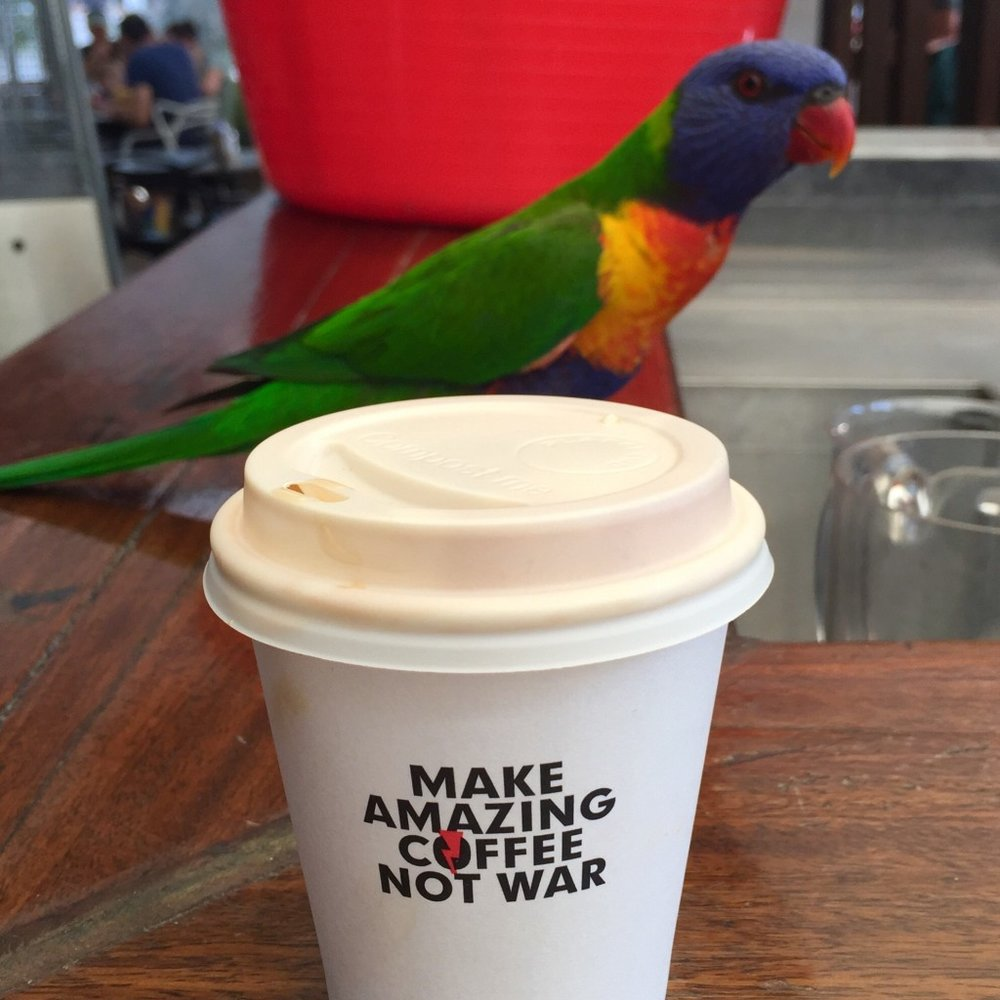 Dani Stevens coffee with rainbow parrot