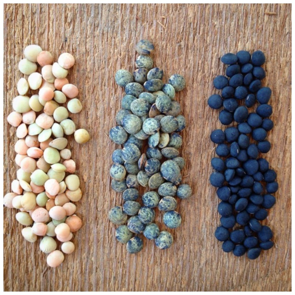 lentils by uprising seeds