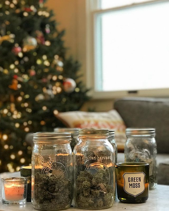 Presents under the tree 🎄 . . . . #cannabis #cannabisculture #cannabiscommunity #classycannabis #maryjane #HomegrownMA