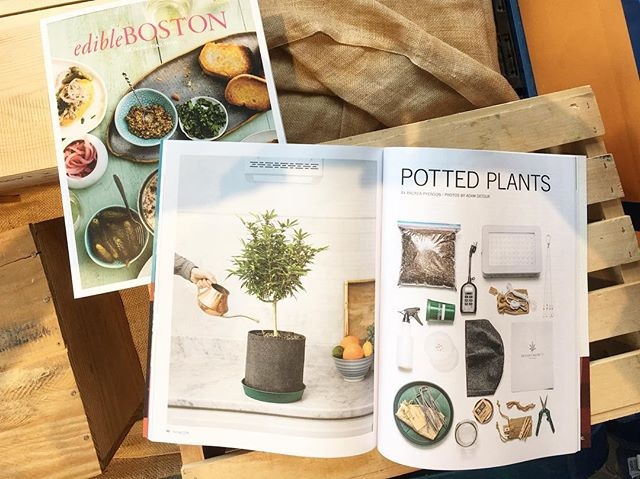 Thanks to our friends at @edibleboston for the gorgeous feature! Go pick up your copy this weekend and read more about our #HomegrownMA grow experience. 🌱 . . . . . . #grassachusetts #classycannabis #cannabiscommunity #cannabis #cannabisculture #marijuanagrowers #growyourown #maryjane #marijuana