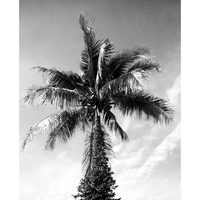 🎵Palm trees in black & white 🎶 #sarasota