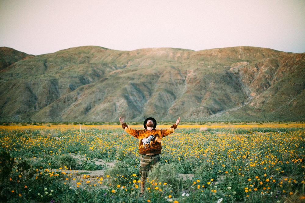 DESERT WILDFLOWER BLOOM - Anza Borrego Desert State Park, CA