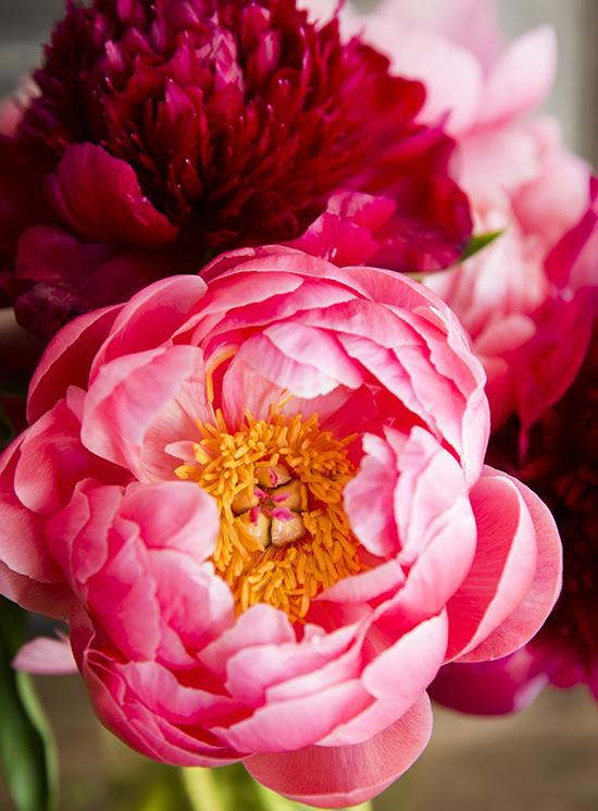 portobellorose-bouquet-detail-bold2.jpg