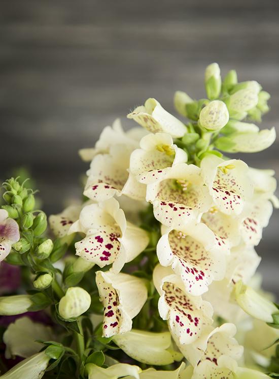portobellorose-bouquet-detail-enmasse5.jpg
