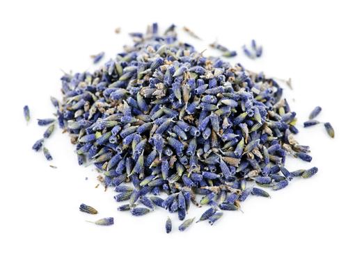 Lavender - Lavendula