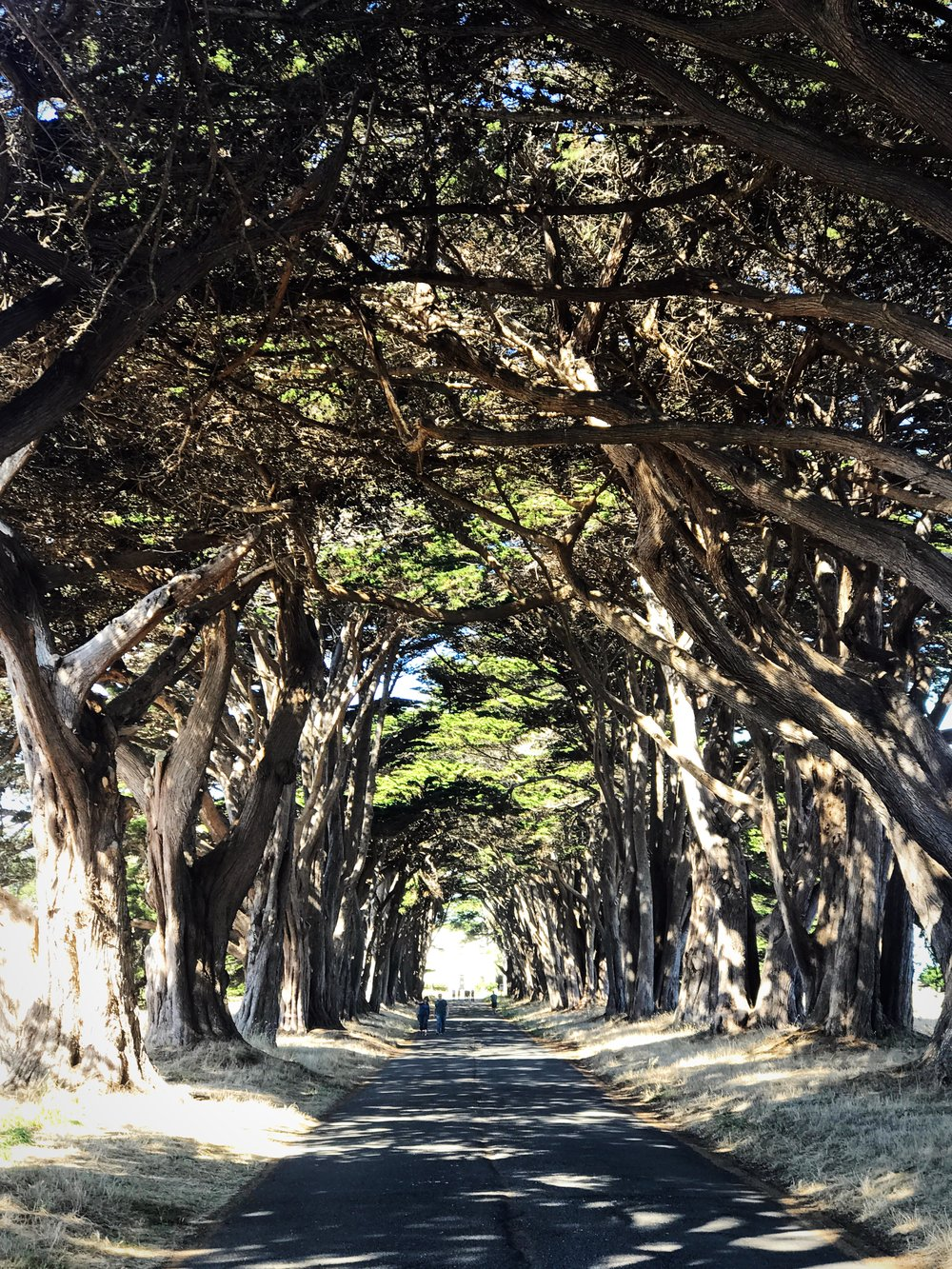 Cypress Tree Tunnel, Point Reyes Shore, Inverness California