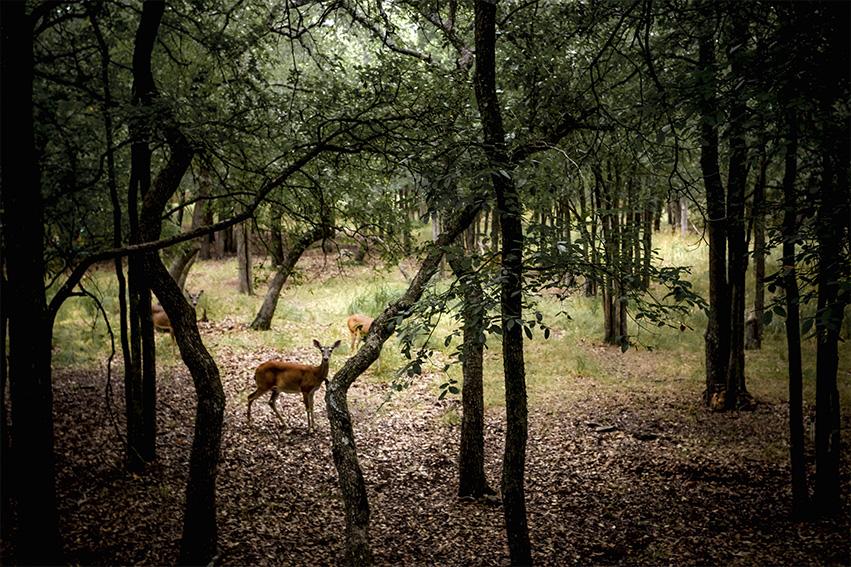 deer_Sarah-Moore_2048.jpg