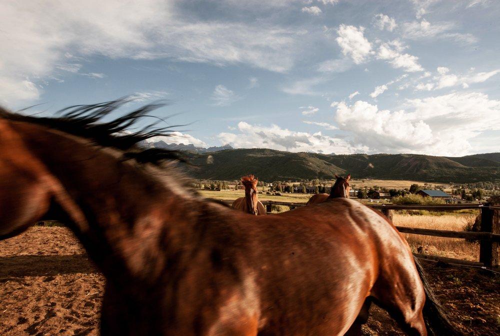 Wild Horses Sarah Natsumi Moore.JPG