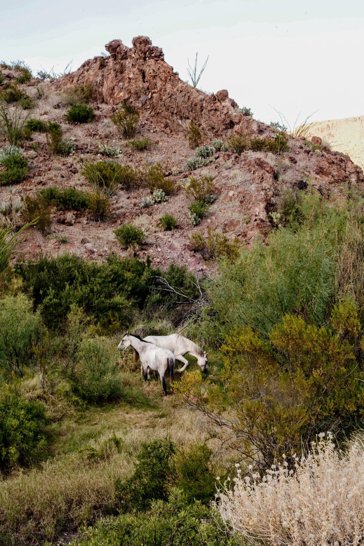 Big Bend Wild Horses_Sarah Natsumi Moore-1.jpg