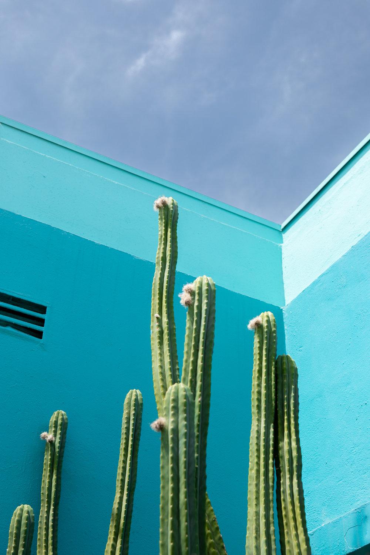 Cactus in Los Feliz, LA California. Photograph by Sarah Natsumi Moore