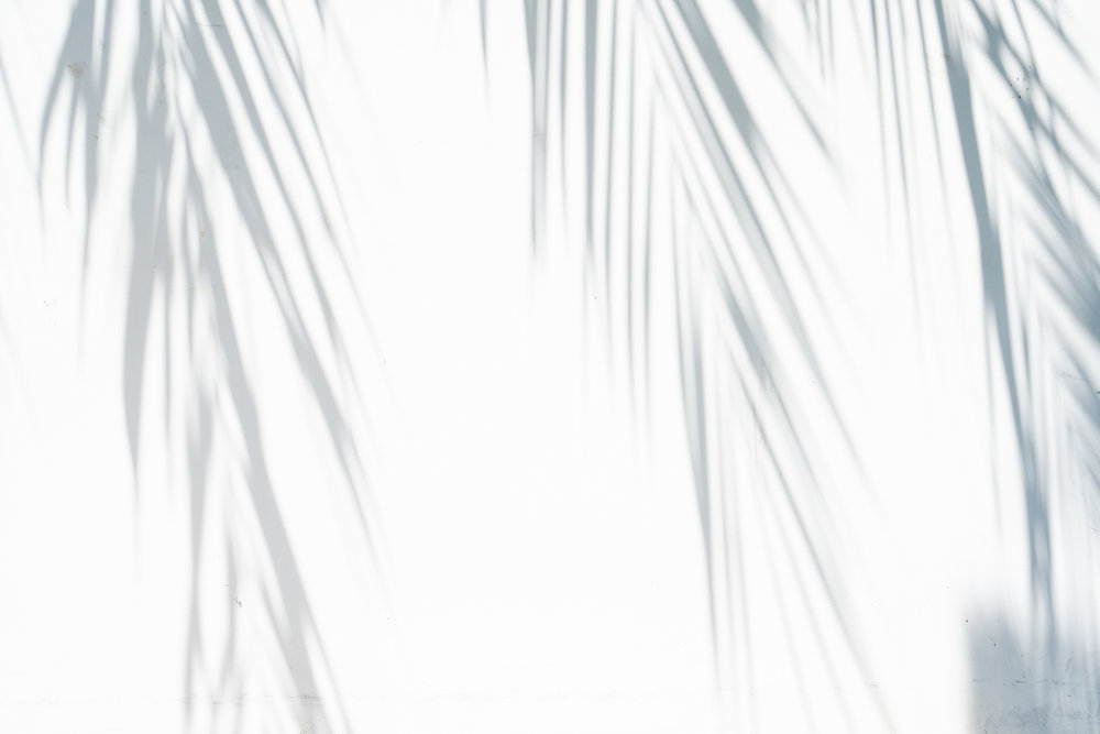Palm Tree shadows on White, Los Angeles California, Photography By Sarah Natsumi Moore