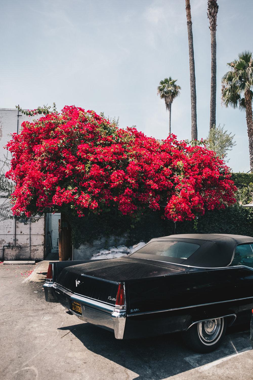 Vintage Car in Los Feliz, LA California. Photograph by Sarah Natsumi Moore