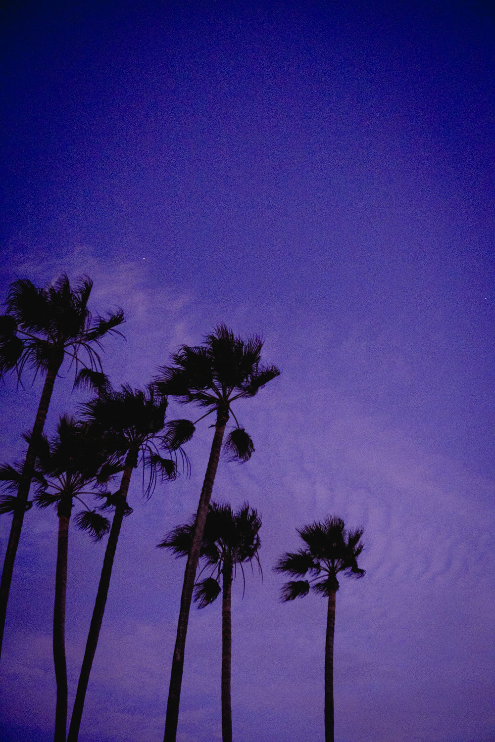 Palm Tree Purple Sunset in Venice Beach, photography by Sarah Natsumi Moore