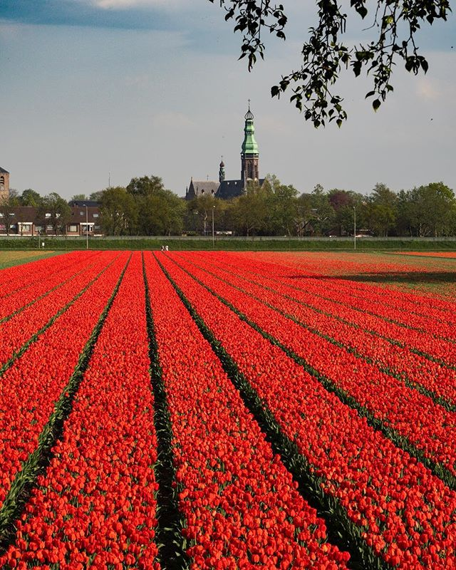 Tulip fields just outside the town of Lisse. Unbelievable, so many vivid colors and patterns #nofilter . . . . . . #keukenhof #keukenhofgardens #lisse  #tulipfestival #tulips #netherlands #nederland #holland #eurotrippin 🍄 #travelphotography #travel #backpacking #sonya6500 #canonglass