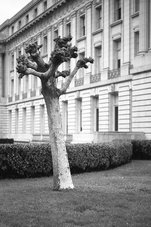 treeportraitlrg.jpg