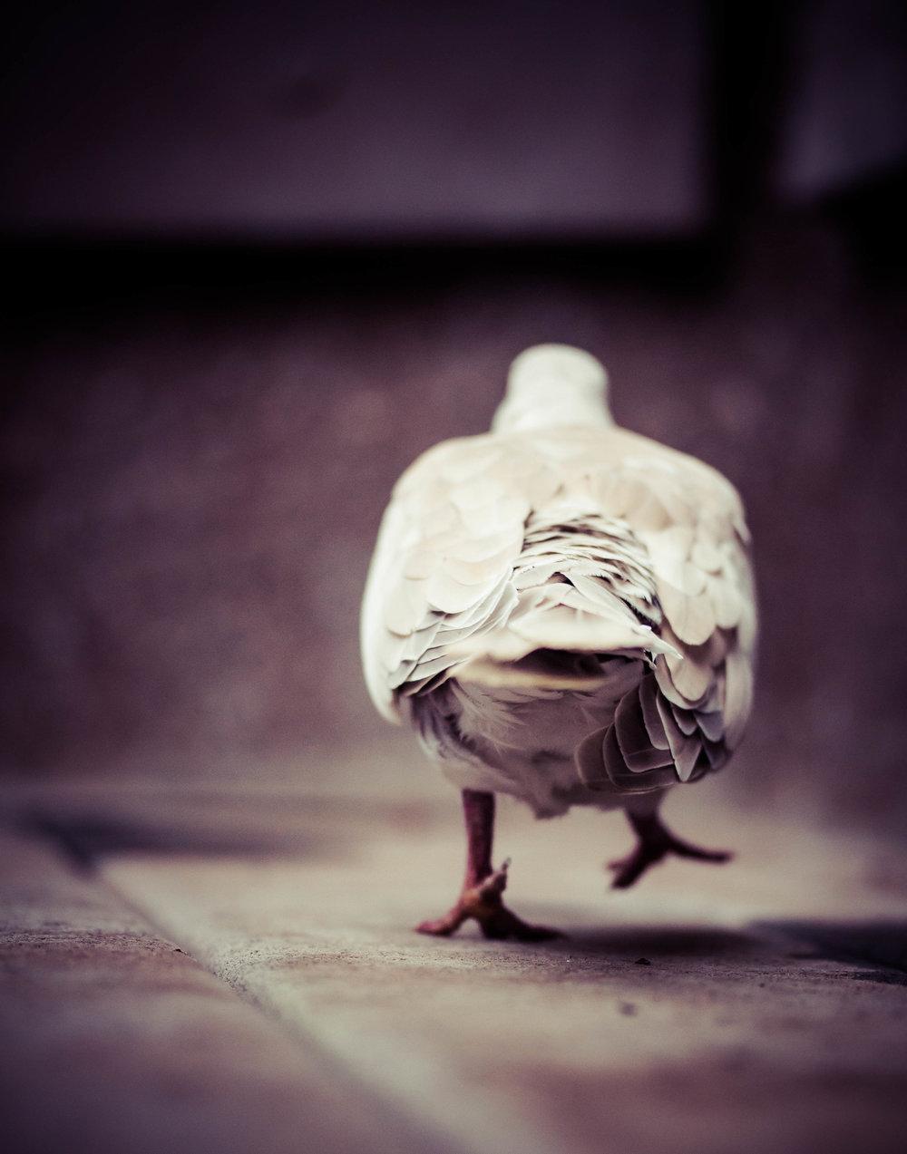 bird bum.jpg