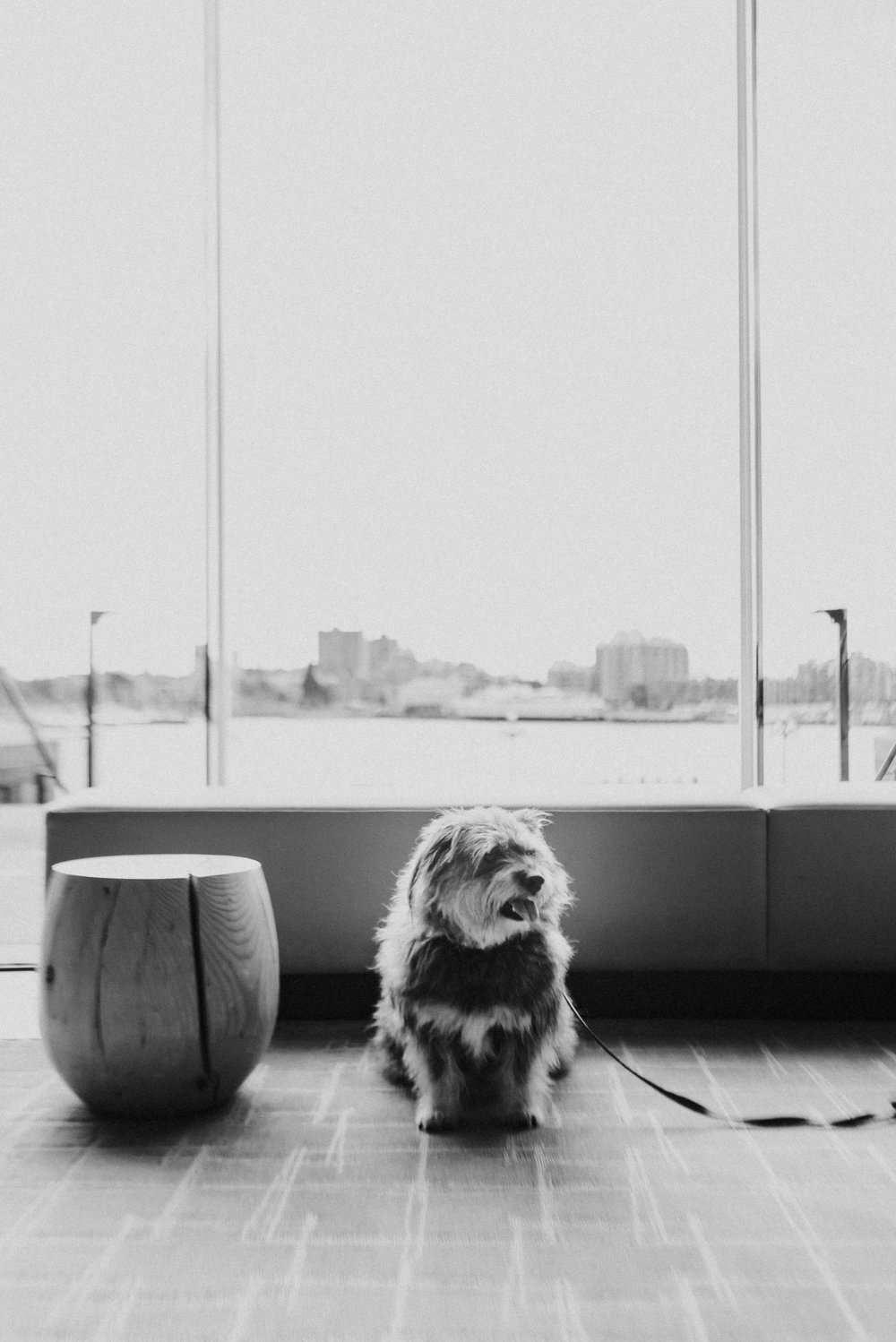 The obligitory artsy black and white shot. Mum was inspired by the pretty light! Here I am sitting in the lobby with my pops. I've been getting a lot of head pats and ear rubs!