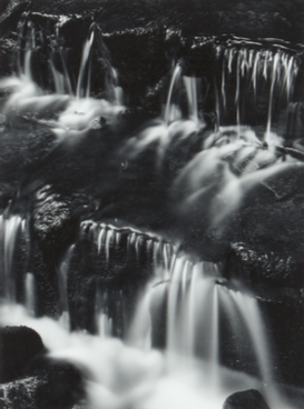Ansel Adams, Fern, Spring, Yosemite Valley, 1961, Adam Fuss, unique photogram, est. £4,000-£6,000 est. £4,000-£6,000
