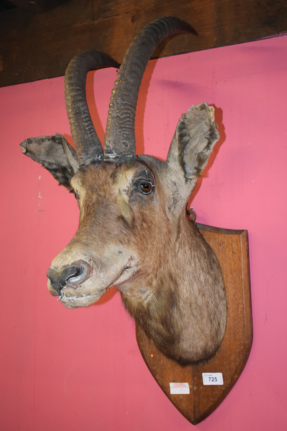Fagins - Taxidermy.png
