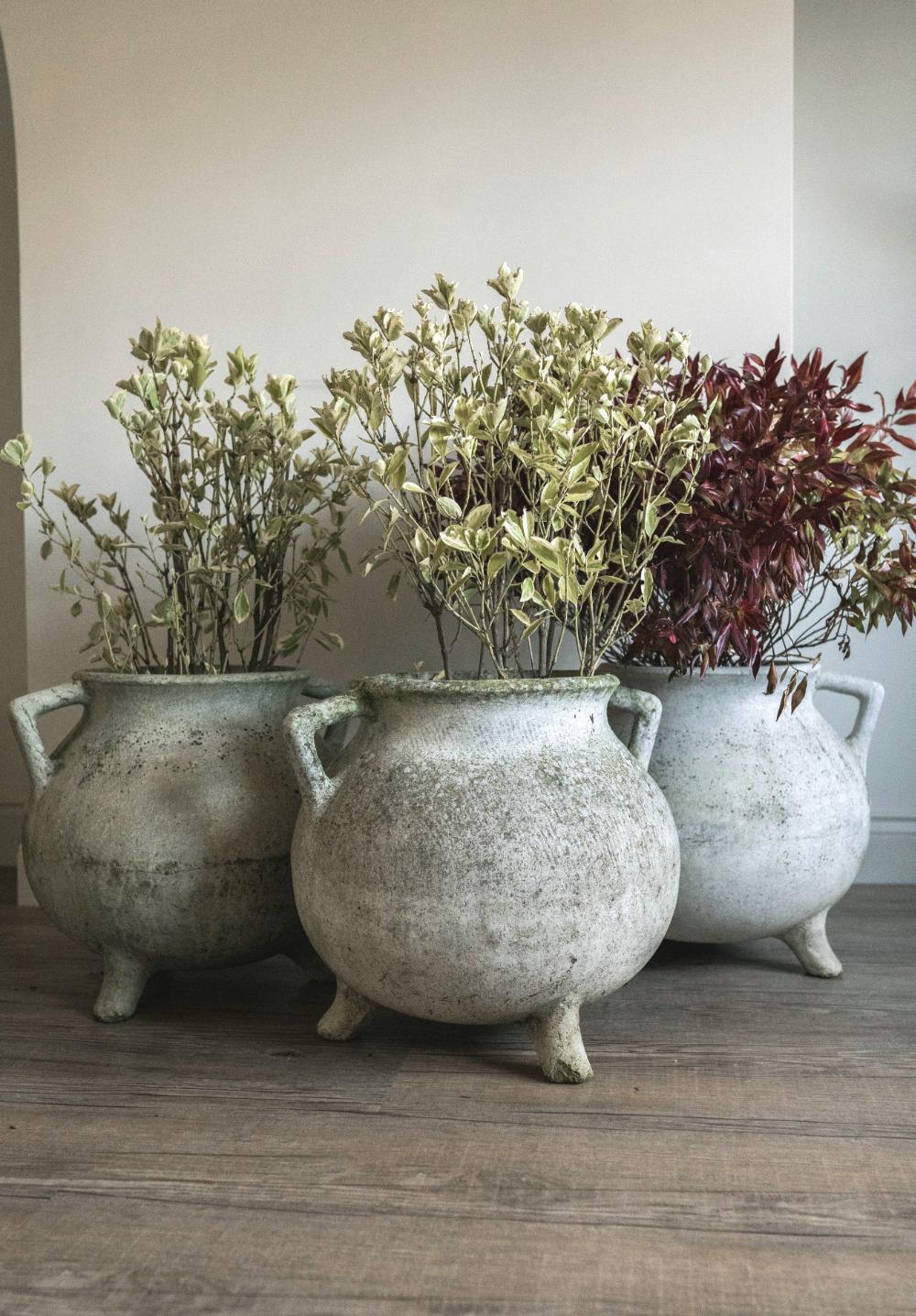 Lovely pot-belly Cauldron planters. Price: £295 each  cotswoldgrey.com