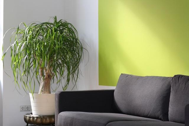 5 Benefits Of Adding Interior Plants Interior Plants