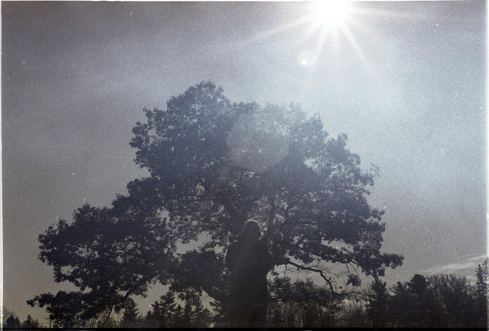 his favourite tree / my favourite light