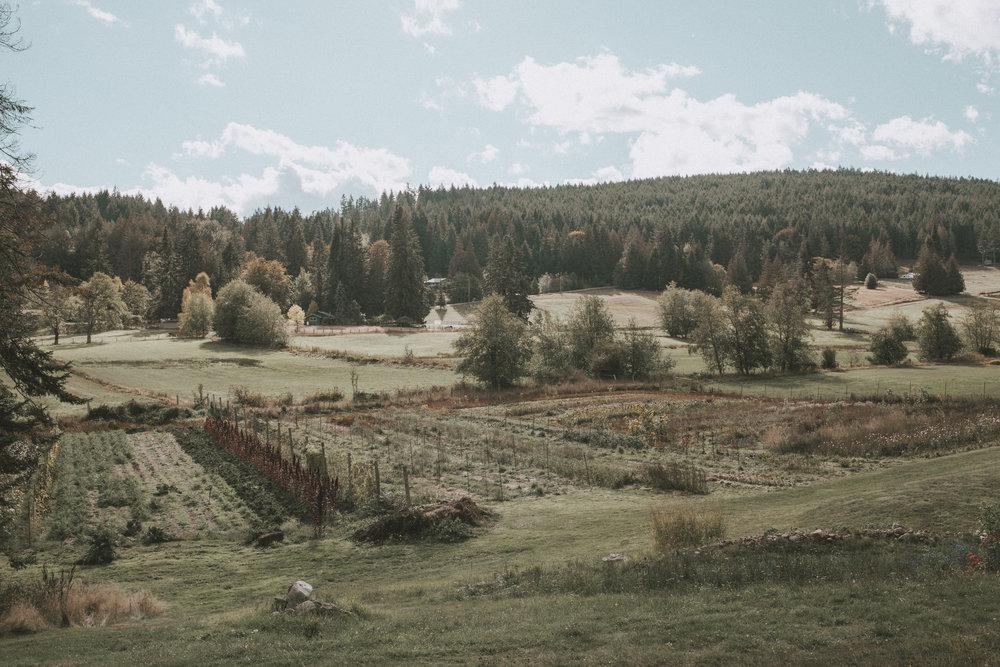 saltspringseeds.jpg
