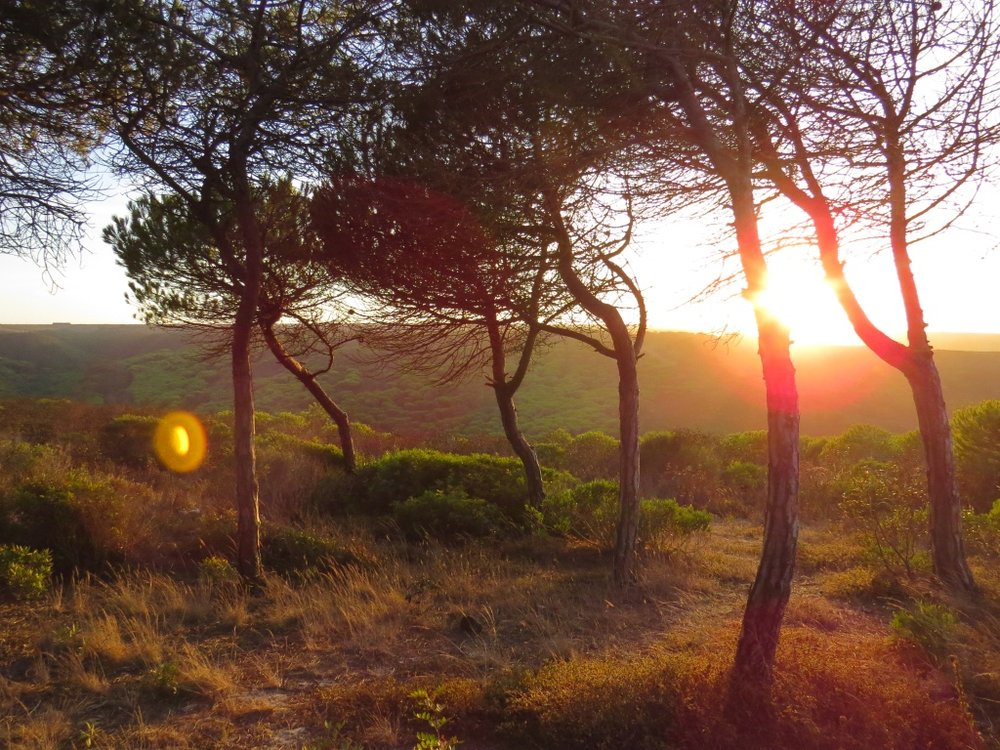 Yoga Retreat Algarve forest